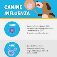 Infographic: Educating Your Clients About Dog Flu
