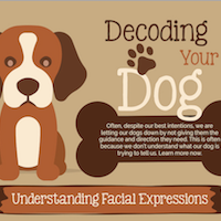 Infographic: Decoding Dogs