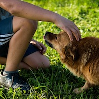 Effective Dog Bite Prevention Program Expands