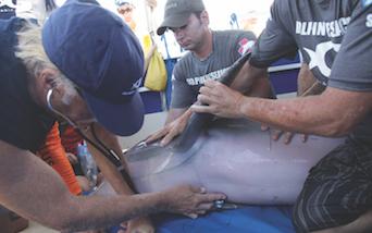 Dolphin Medicine