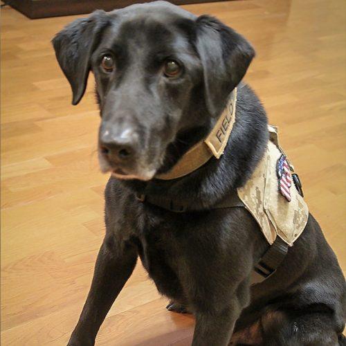 Hero Dog Fieldy