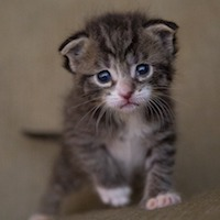 Kittens in Congress: A Bipartisan Effort to End USDA Testing