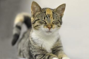 Kittens USDA Investigation