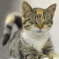 Why Is the USDA Killing Hundreds of Kittens?