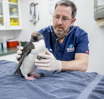 Aquarium Medicine: An Ocean of Possibilities