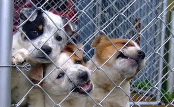Waze Best Friends Animal Society