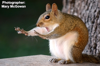 squirrel photo contest