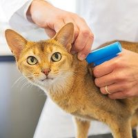 AVMA's 'Check the Chip' Day Urges Vets, Pet Owners to Ensure Microchip Data Is Up to Date