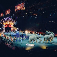 UPDATE: New Jersey Becomes First State to Ban Wild Animal Circus Acts