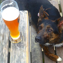 STATE NEWS: New Jersey Bill Would Allow Pets in Breweries