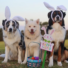 Adorable Four-legged Easter Egg Hunts