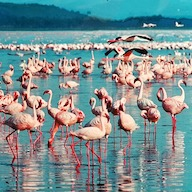 WANTED: Chief Flamingo Officer