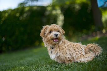 Pet Insurance Market Projected to Reach $2 Billion