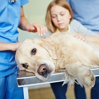 Merck Launches Awareness Campaign to Push Canine Flu Vaccination